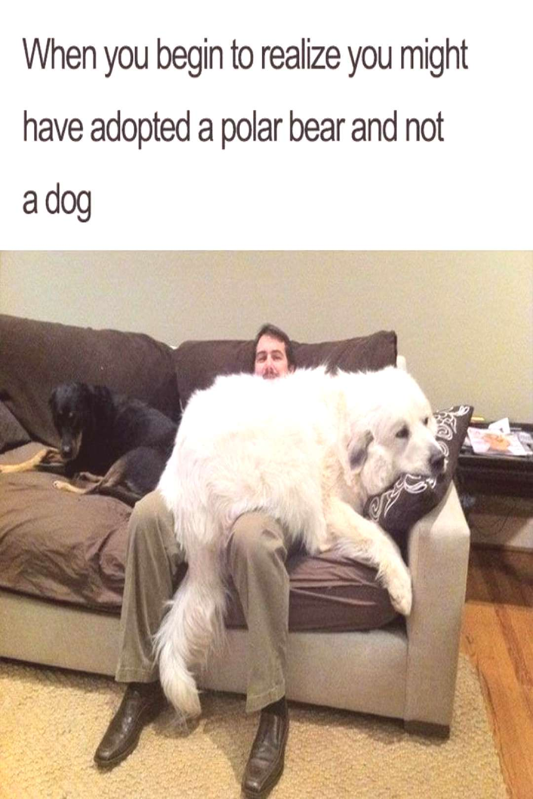 101 best funny dog memes - quotWhen you begin to realize you might have adopted a polar bear and not a