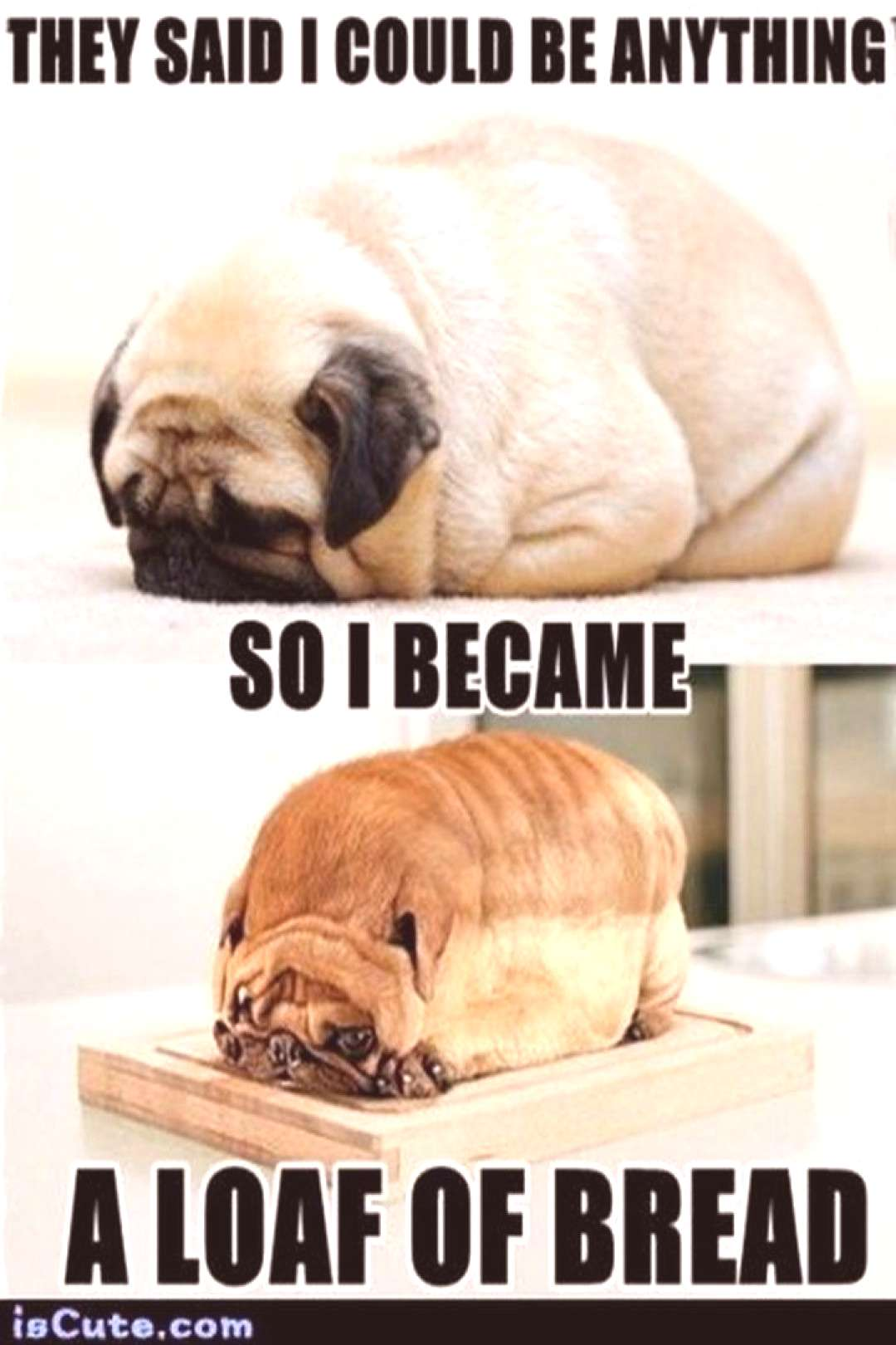 101 Cute Pug Memes - quotThey said I could be anything so I became a loaf of bread.quot