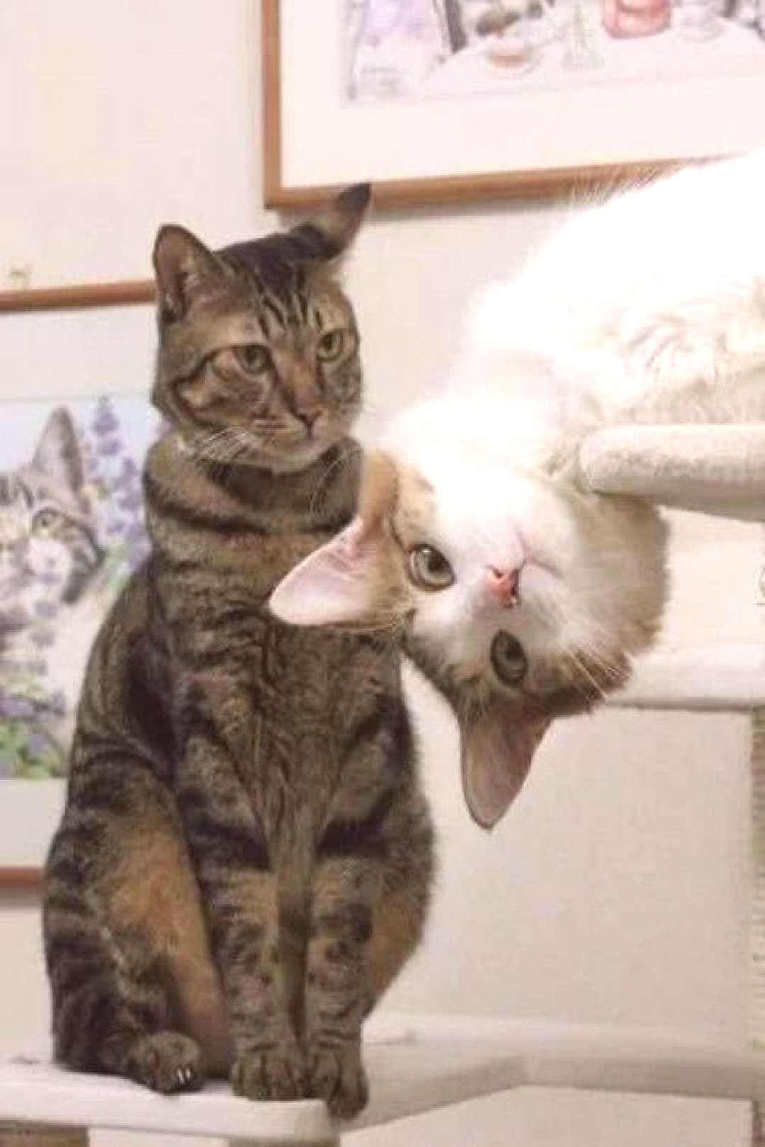 19 Perfectly Timed Pictures of Cats