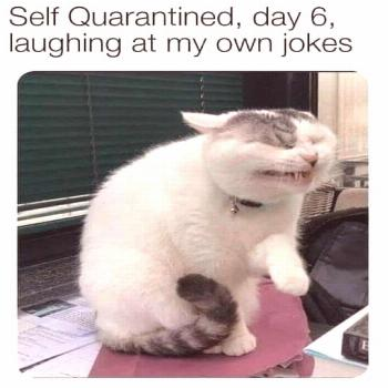 17 Funny cat memes about being quarantined – Funnyfoto - Page 7