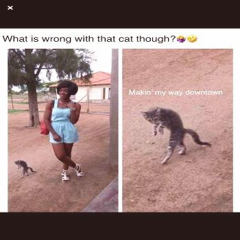 20 Funny Kitty Cat Memes Too Cute To MissSource by breakmemes