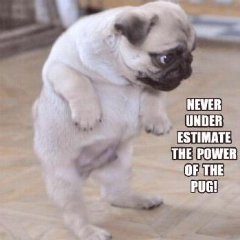 23 Pug Memes That'll Leave You Howling With Laughter