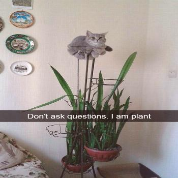 30+ Hilarious Cat Snapchats That Are Im-Paw-Sible Not To Laugh At (New Pics)