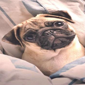 additional relevant information on funny pugs. Take a look at our web site.