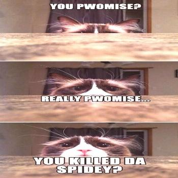 funny cat memes - Google Search