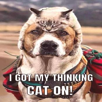 Funny Dog Meme with a dog with a cat on his head. by barkinglaughs