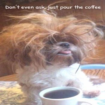 Funny Dogs That Will Make Your Day (52 Pics) - Page 3 of 4 - Wackyy