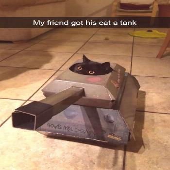 Hilarious-cat-snapchats