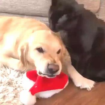 I love you, so I lick you, don't be upset!