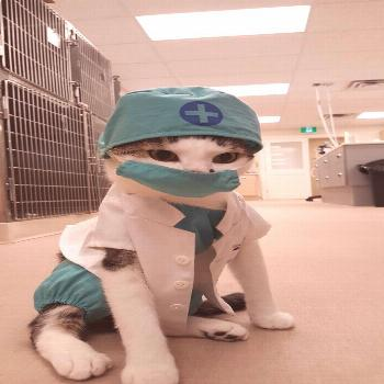 insanityrn:  Nurse Floofypants is our most requested OR nurse.  She just puts the patients at ease