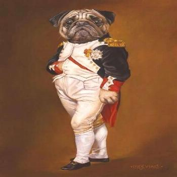 Learn more details on funny pugs. Have a look at our site.
