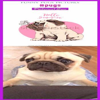 Pet accessories  funny pug pictures, funny pug names, happy bir...#accessories