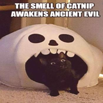 Source by woodsfaith474 videos wallpaper cat cat memes cat videos cat memes cat quotes cats cats pi