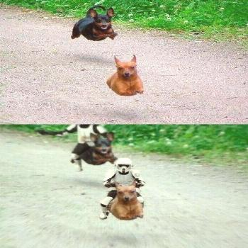 star wars dogs - i seriously laughed for a good 5 minutes
