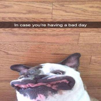 The Most Hilarious Animal Memes (21 Pics) |