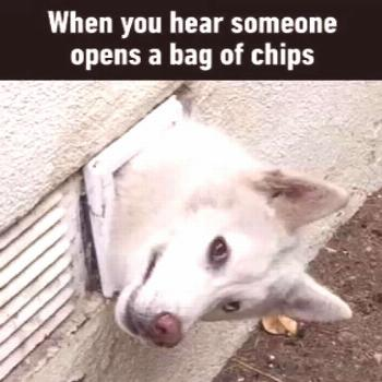 The strangest 5 behaviors dogs do You will not believe it  These extra-wholesome dog memes are givi
