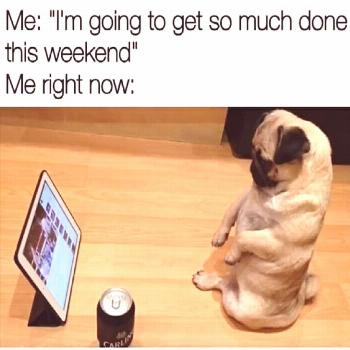 When You Can't Be Pug-ductive . CLICK TO SEE MORE FUNNY PUGS PICTURES!#top5