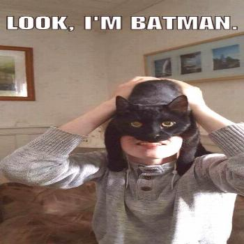 Would have been funnier if it said catman instead of batman lol - Funny Cat Quotes
