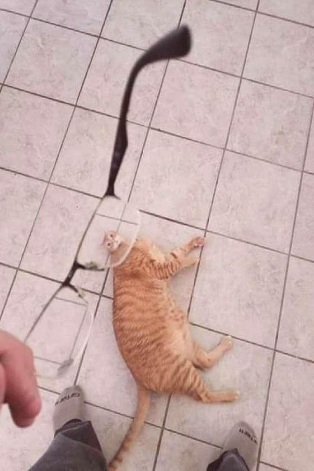 40 Funny Cat Pictures – Funnyfoto | Funny Pictures - Videos - Gifs - Page 6