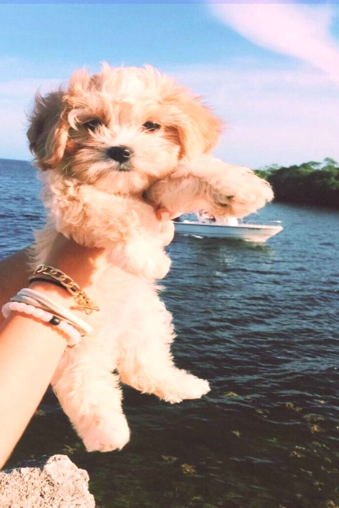 50+ Cute Puppy Pictures You Will Love - -  50+ Cute Puppy Pictures You Will Love –  -