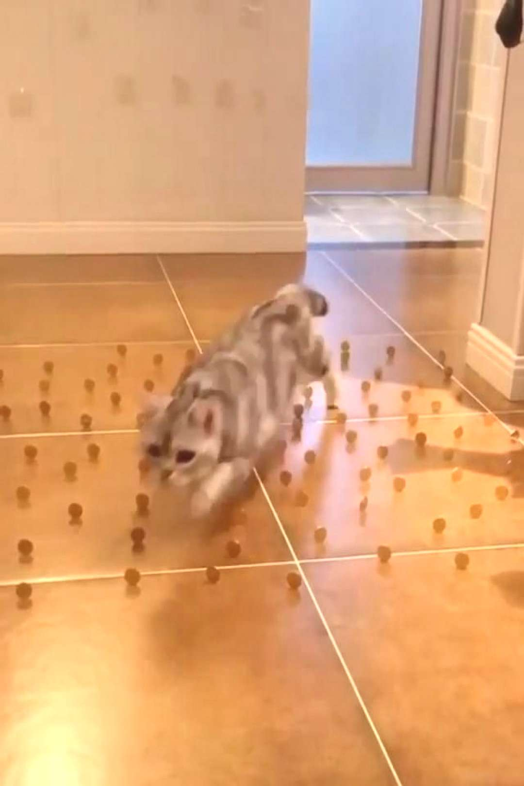Cats are masters of the maze