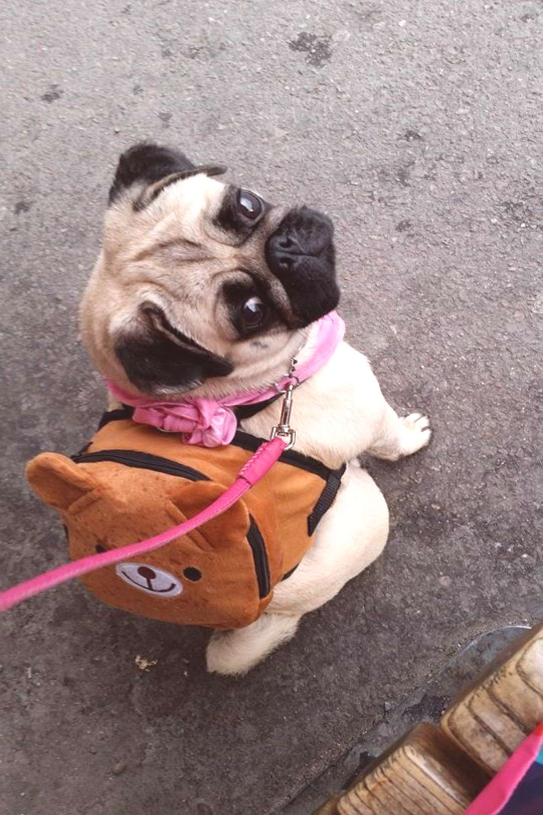 Check out our site for additional info on funny pugs. It is actually an excellent place to read mor