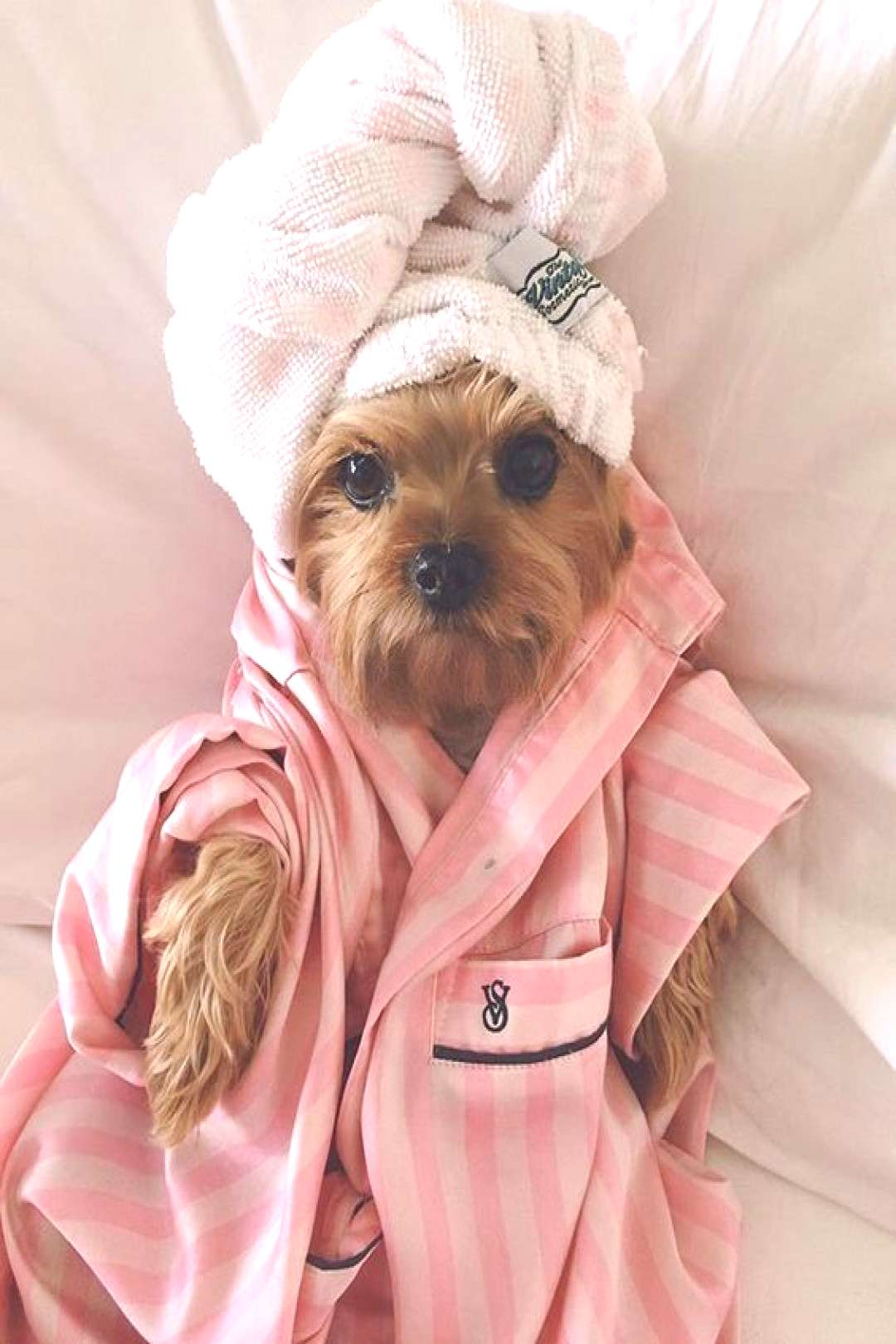 Dogs 101: Shampooing pour chien Dogs 101: Shampooing pour chien