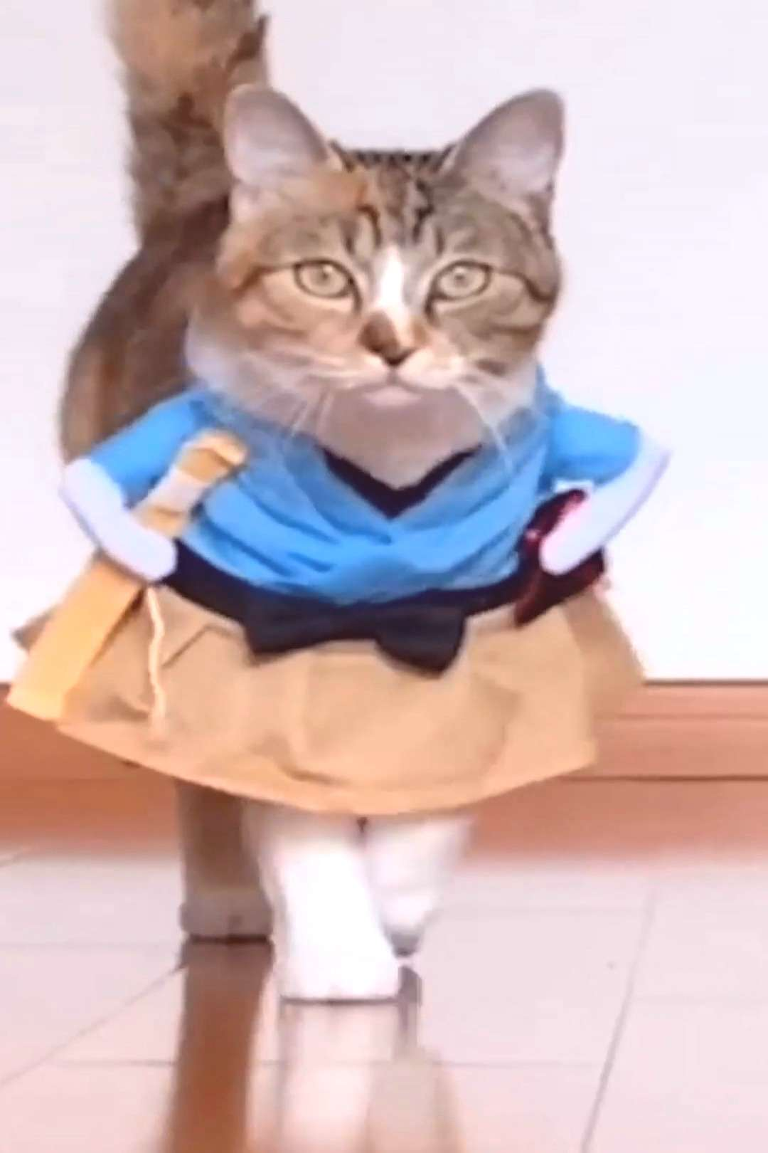 Funny Cat Costumes High quality Made of high-quality material, keep your pet feel comfortable all-