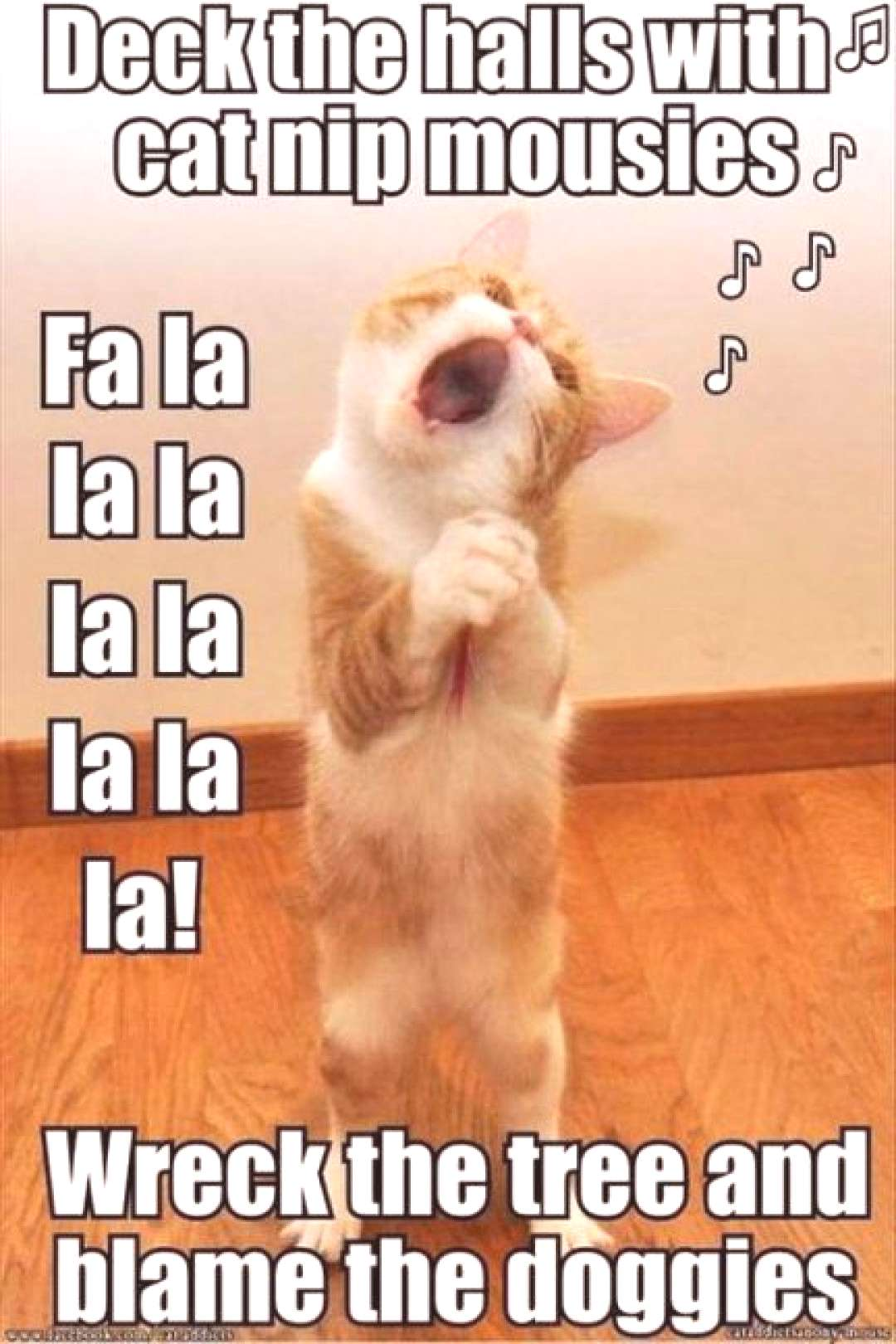 Funny Cats Memes Laughing So Hard Hilarious Songs 51 Ideas Funny Cats Memes Laughing So Hard Hilari