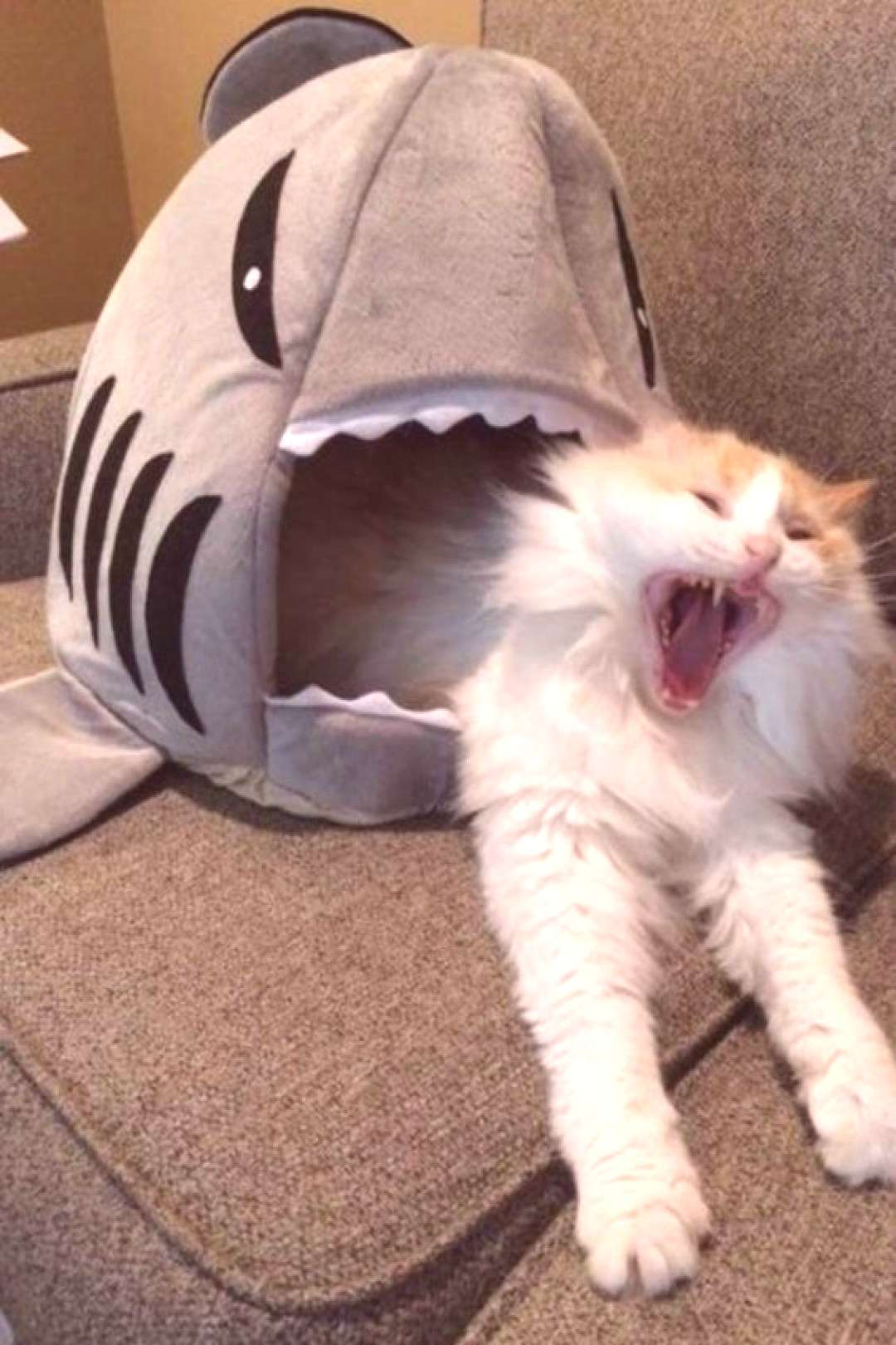 Give your cat this shark cat house and snap your own funny cat memes! Makes a great last minute Chr
