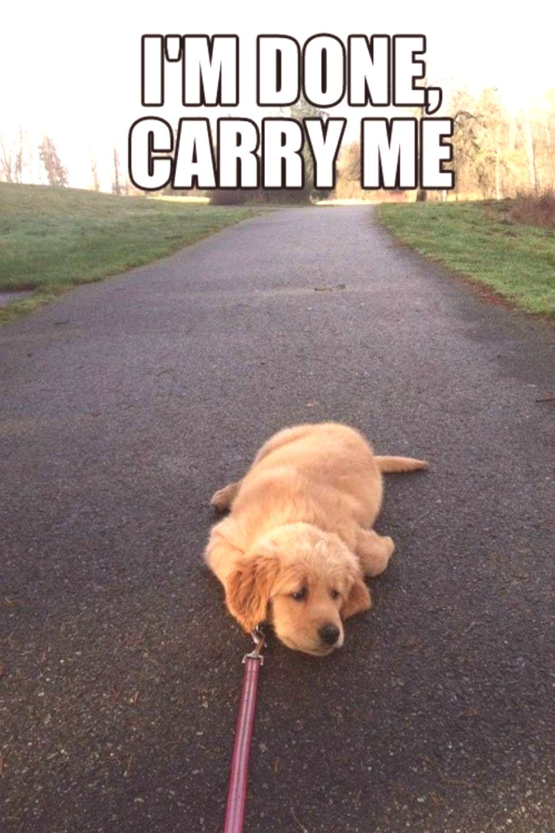 I'm done. Carry me. A funny dog❤ | Funny dog memes
