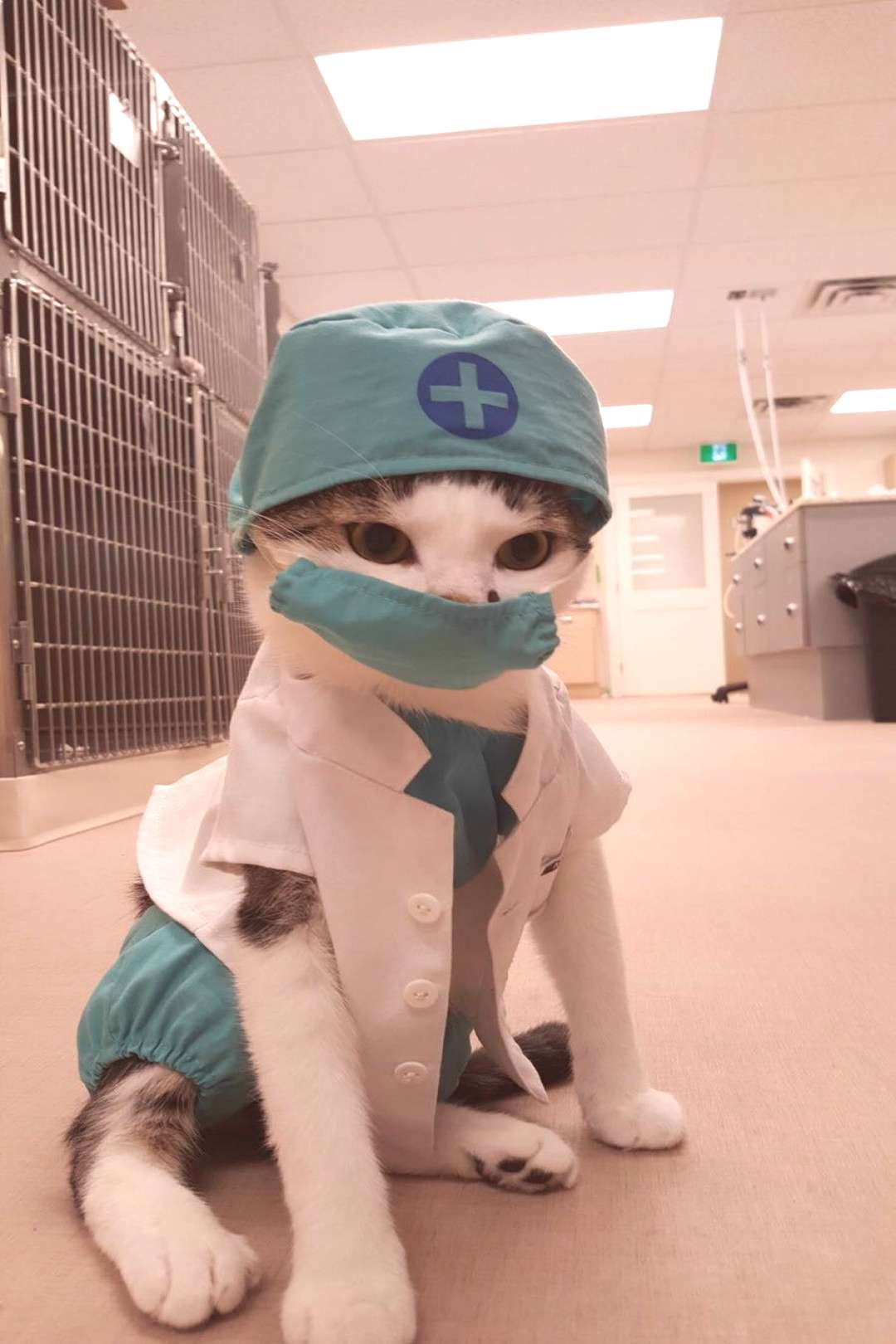insanityrn Nurse Floofypants is our most requested OR nurse. She just puts the patients at ease