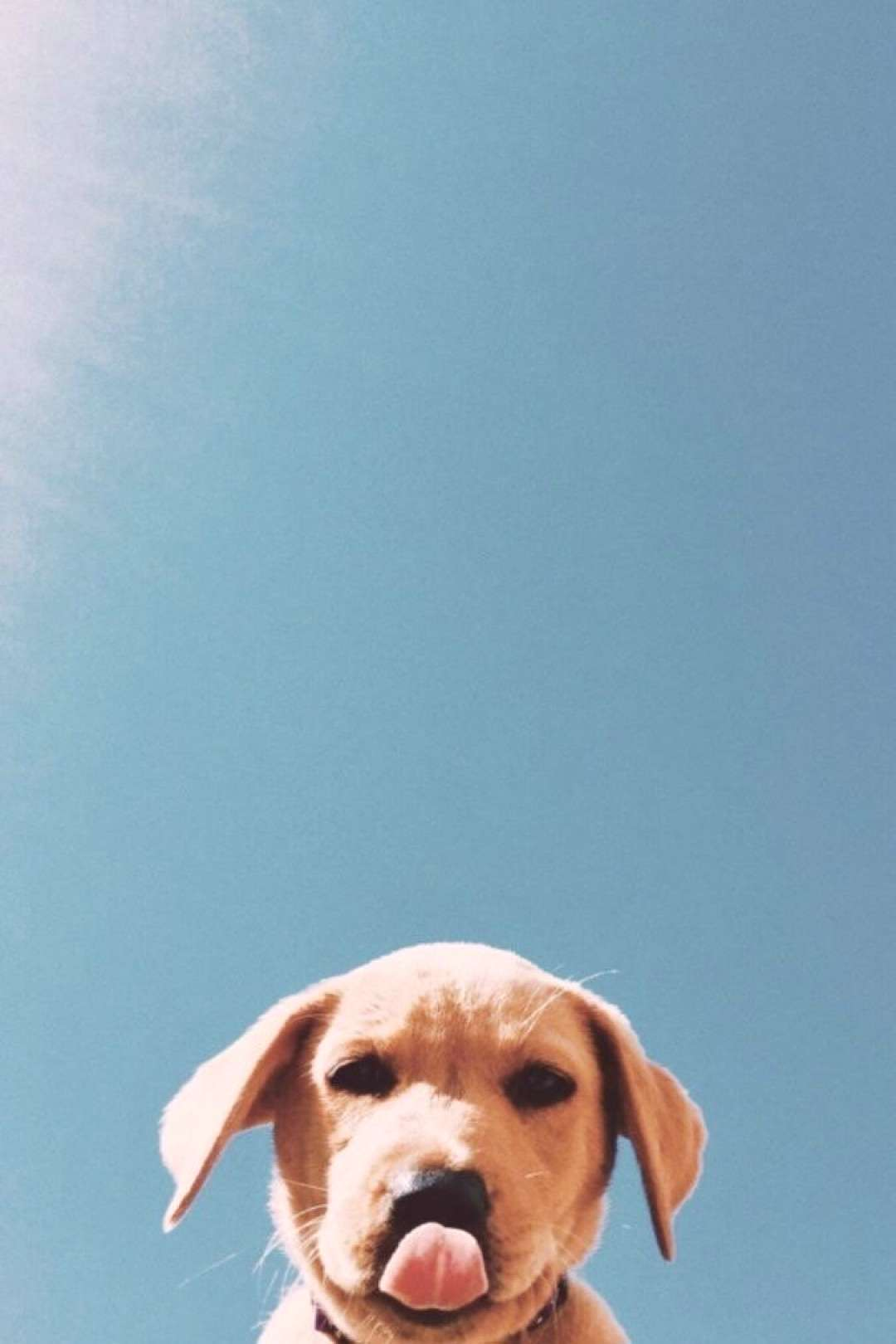 iPhone and Android Wallpapers: Cute Puppy Background for iPhone and Android