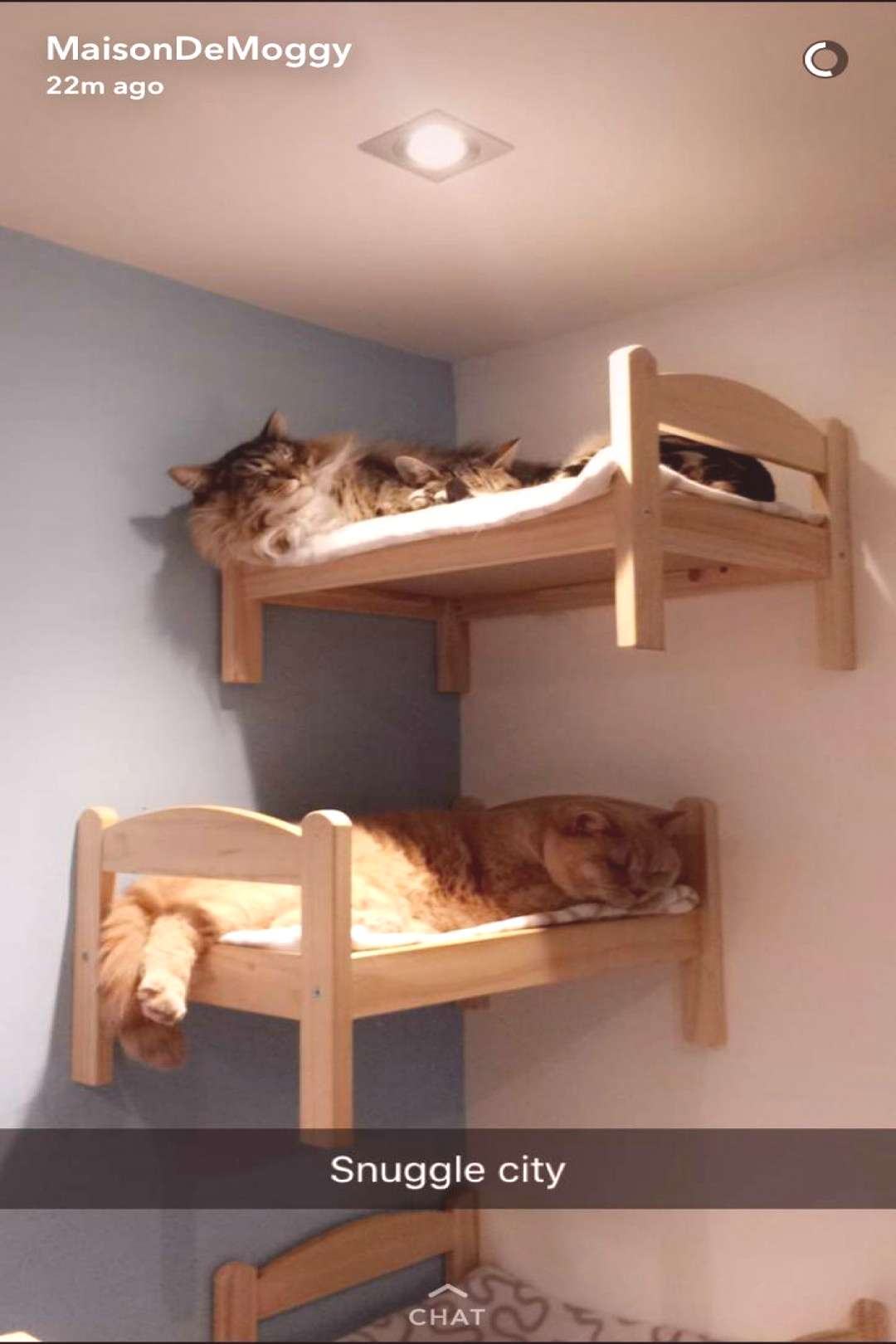 Snuggle city.   HOW CUTE!!!  Our cats loved cat shelves when we had them.  I've seen beds like thes