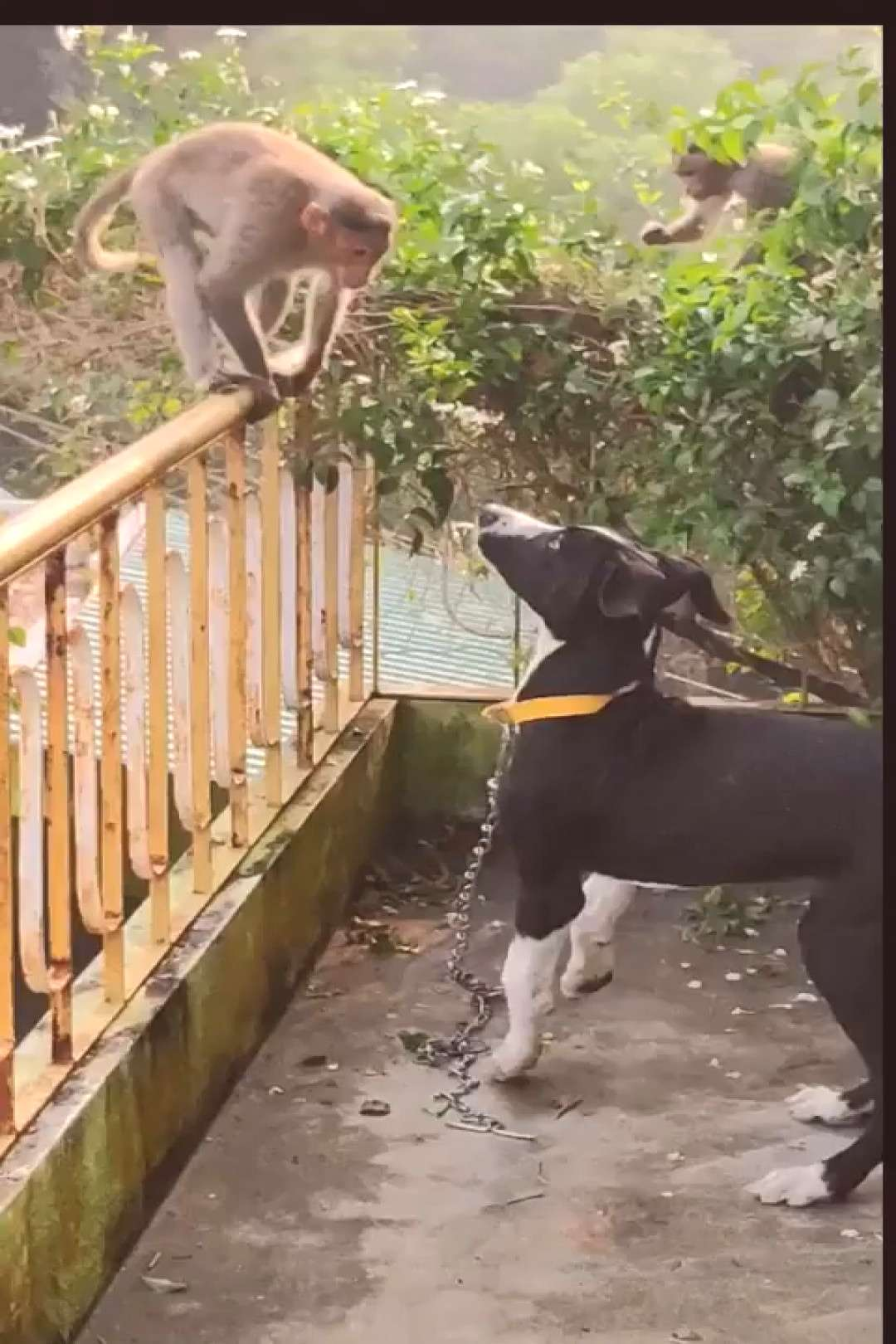 These chimps come by everyday to keep the doggo company.  Follow us on Facebook :