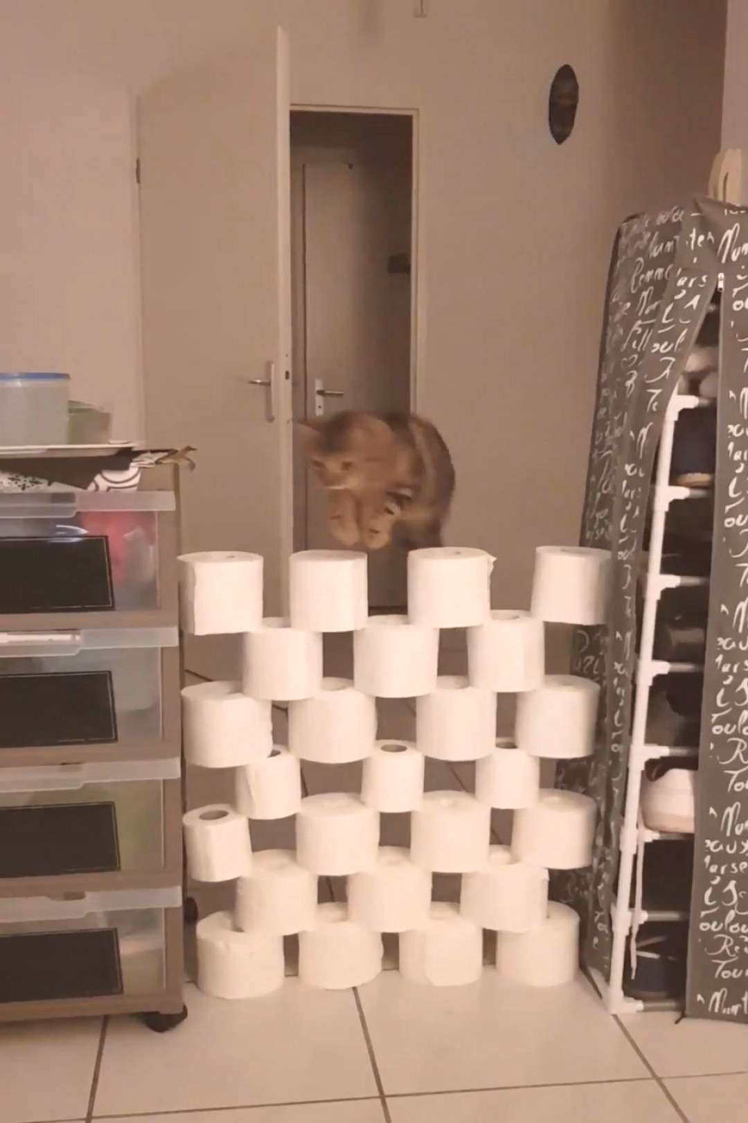 This explains all the toilet paper hoarding...